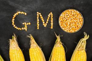 «Эволюция еды» и дебаты о ГМО