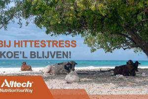 HITTESTRESS - Hoe K'OEL' te blijven?