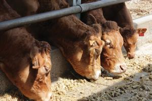 Soluciones Alltech para el Ganado Vacuno de Carne