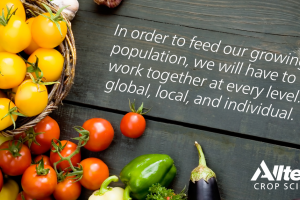 Une production agricole durable contribue à promouvoir la sécurité alimentaire