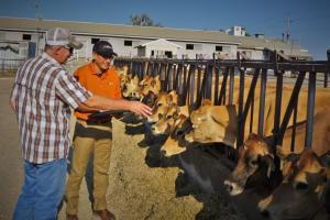 Джордж Дельгадо, консультант программы поддержки на ферме компании Alltech, работает с производителем.