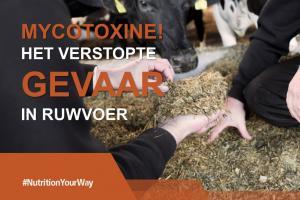 Mycotoxinen - Het verstopte gevaar in ruwvoer!