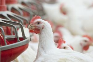 Da li ste spremni za borbu sa ugrožavanjem vaše hrane ? Naučite kako da odbranite vašu živinu od napada plesni i mikotoksina.