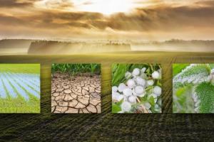 Kiša, hladnoća, toplina, pa čak i vjetar – isti meteorološki čimbenici koji pomažu rastu biljaka – mogu postati i iznimno štetni ako su prisutni u prekomjernim količinama.