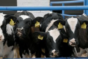 Postoje brojne vrste bakterija roda Clostridium, no stočari trebaju posebno voditi računa o bakteriji Clostridium perfringens, koja može imati veliki utjecaj na zdravlje crijeva životinje.