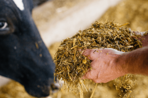 Ration formulation for improved efficiency and lower feed costs.