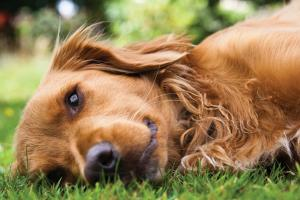Soluciones de Alltech para Mascotas