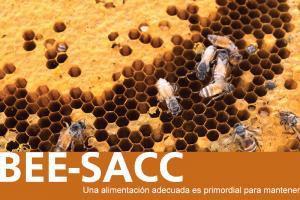 BEE-SACC > Soluciones para la apicultura profesional